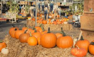 Fall Attraction Insurance in Georgia